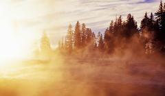A forest in the mist at sunrise.